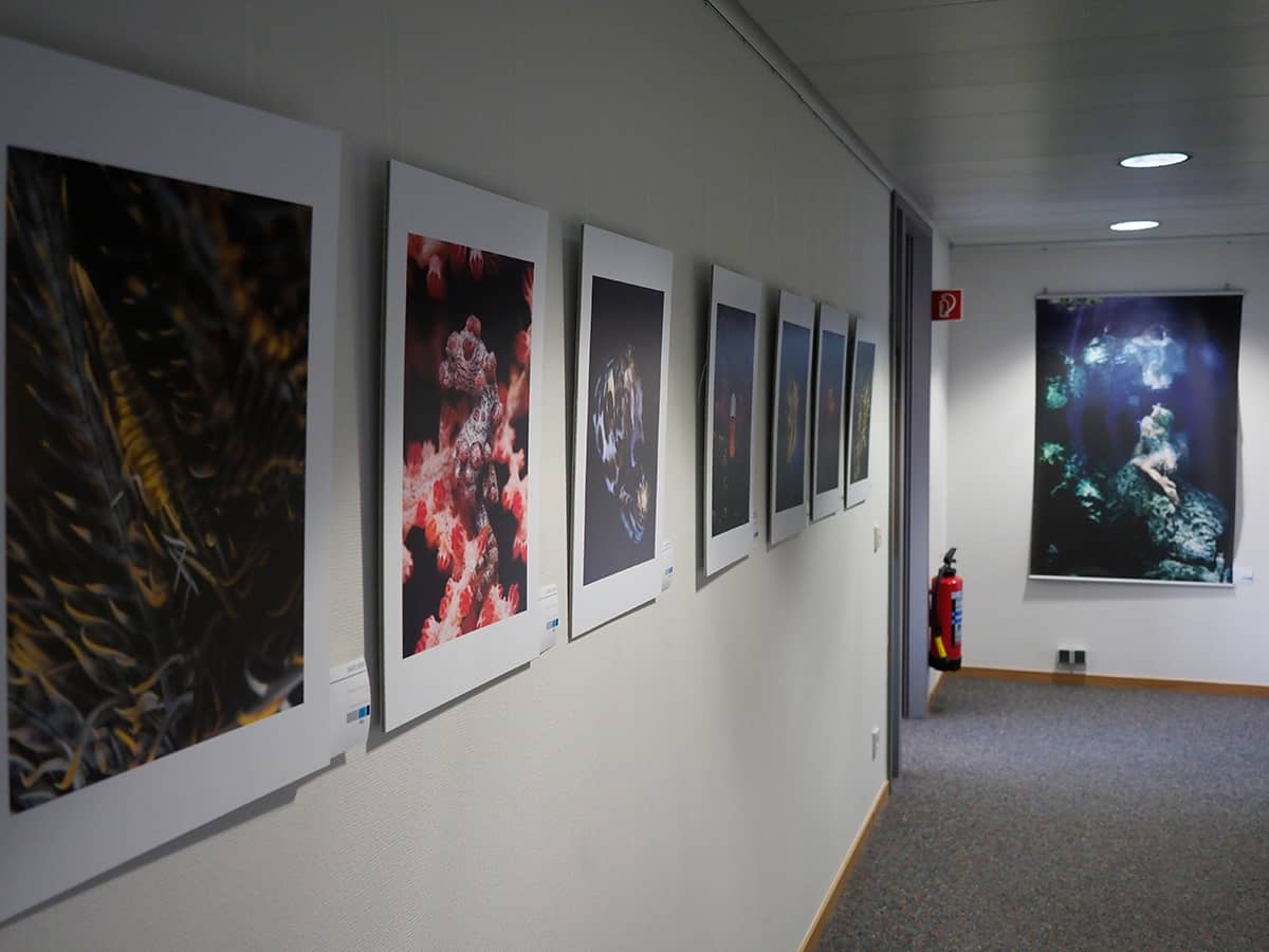 Vernissage underwater photography.